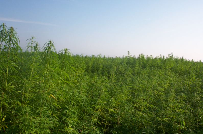 Industrial Hemp Growers